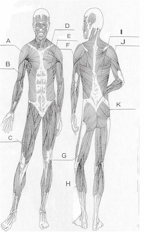 Index Of Bioteacher10 Human Systems